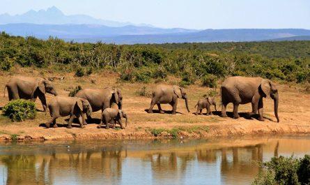 Les activités à privilégier lors d'un voyage en Namibie